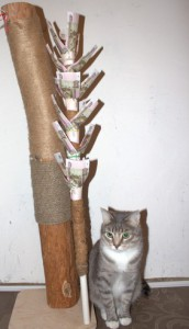 Кот у вошебного дерева