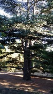 красивое дерево, сильное дерево