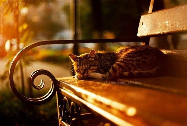 сон кошки, осень, кошка на скамейке