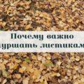 листопад, желтые листья, чувство
