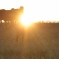 закат, солнце, солнечный свет